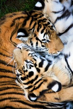 Someday I will see these beautiful animals everyday!