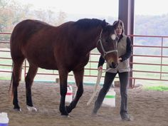 Horse clicker training - Walking one step foward during ground work