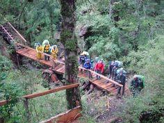 VIDEO Shinrin Yoku, o Baño de Bosque - Sendero puente colgante - selva valdiviana bosque nativo de Chile.