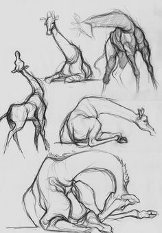 Giraffe sketch – study of the body and movement