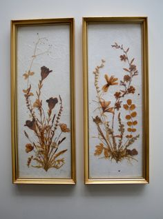 Vintage Pair of Pressed Flowers Botanical Art in Gold Frames Made in Germany (W. Germany) on Etsy, $25.00