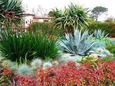 This eye-catching garden weaves together succulents and other drought-tolerant plants for a long-lasting impact. Color and texture highlight this landscape creation, where bold plants like Agave americana (Century Plant), Dracaena draco (Dragon Tree) Succulent Landscaping, Landscaping Plants, Succulents Garden, Landscaping Ideas, Coastal Landscaping, Landscape Design, Garden Design, Desert Landscape, Plant Design