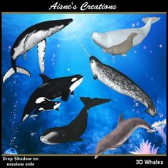 3D Whales & Dolphins Graphic Pack