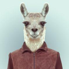 Zoo Portraits: fotomontajes de animales con creatividad y humor