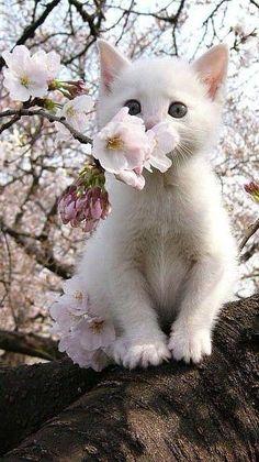 Tão lindo e cheiroso quanto as flores!