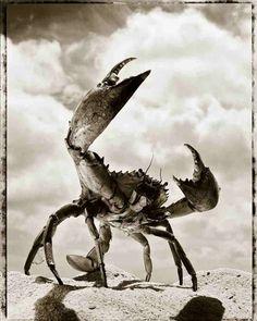 the formidable crab. for Nick. photo by Italian photographer Gian Paolo Barbieri. via Nikon School