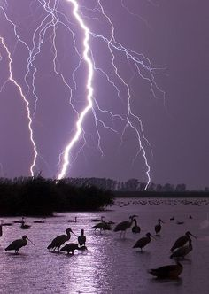 birds are unfazed by lightning!