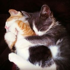 Snuggly cats