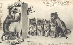 Punch and Judy Cats