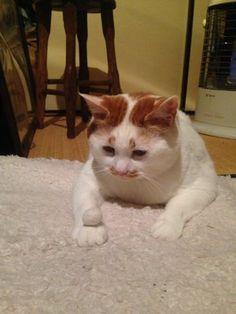「自分の毛で作ったオモチャて遊ぶ猫」