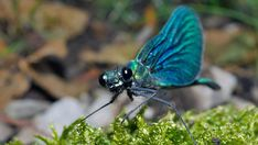 Find images of Dragonflies. ✓ Free for commercial use ✓ No attribution required ✓ High quality images. Dragonfly Images, Damselflies, Pictures Images, Dragonflies, High Quality Images, Find Image, Insects, Butterfly, Black And White
