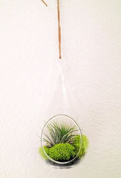 Air Plant Kit / Hanging Air Plant Glass Teardrop by EmmaClaireShop