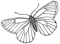 Butterfly Coloring Pages - 4