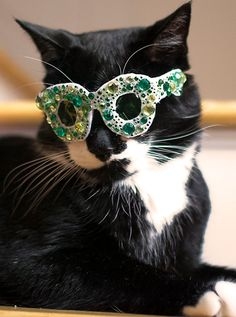 St. Patrick s Day Glasses for Cats   Green Bling by NotsoKittyShop Cool  Cats, I fd8bebec65bc