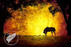 The Virginia Equine Artists Association was founded to promote, market and provide educational opportunities for Virginia Equine artists and photographers. Equine Art, Virginia, Elephant, About Me Blog, Horses, Artists, Photography, Animals, Painting