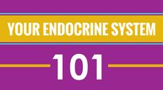Your Endocrine System 101 - http://www.wheatberrycafe.com/?p=3529