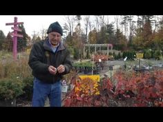 www.Sollecito.com How To Winterize Shrubs And Plants l Learn how to tie up plants and shrubs for the winter, and when to cut back shrubs