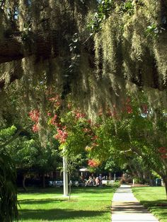 Ringling Museum ,Grounds . Beautiful to walk under.