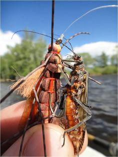 Big Hole River Fishing Report