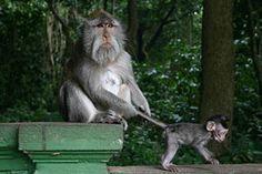 Monkey Forrest!