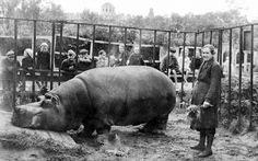 """""""Belle survived the war thanks to her caretaker, Yevdokia Dashina. In 1941 water was turned off throughout the city and Belle's pool was empty, so her skin began to dry out and crack. Every day, Dashina would drag a 40-liter barrel of water from the Neva river and rub the suffering hippo with camphor oil. Eventually, Belle's skin healed and she was able to hide underwater through the air raids."""""""