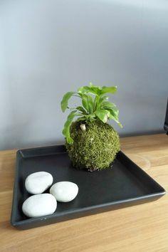 Un peu de jardinage : Tuto pour faire un kokedama                                                                                                                                                                                 Plus