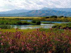 Silver Creek. Idaho, Earnest Hemmingway's favorite fishing locale.