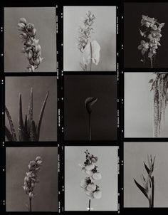 Moody florals mood board black and white, flower styling and photography, moody wedding and brand design, feminine inspo. Marco Polaroid, Polaroid Frame, Instagram Frame, Frame Template, Aesthetic Pictures, Film Photography, Pattern Photography, School Photography, Wall Collage