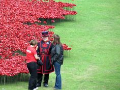 Stock photo of Poppies at the Tower of London by chris williams - Pictures of England