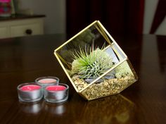Contemporary Square Geometric Terrarium Kit with a beautiful living Tillandsia Air Plant. The ornate, copper & glass geometric terrarium adds style to any space Large Terrarium, Air Plant Terrarium, Terrarium Diy, Glass Terrarium, Terrariums, Power Of Meditation, Crystal Garden, Copper Glass, Garden Pictures