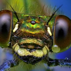 check out those compound eyes...Ondrej Pakan