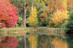 https://flic.kr/p/eiBqKC | Sem título | Autumn colors