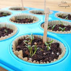 Growing Tomatoes From Seed Repurpose / upcycle a rusty, crusty muffin tin from the thrift store as a perfect way to germinate your herb and vegetable seeds for your summer garden! Indoor Vegetable Gardening, Hydroponic Gardening, Hydroponics, Container Gardening, Organic Gardening, Gardening Tips, Gardening Supplies, Desert Gardening, Pallet Gardening