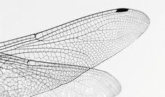 Stefanie Reich Bionic Experiments Bionik Design