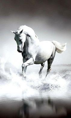 White horse ✿⊱╮