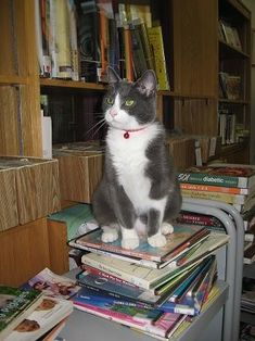 The Cazenovia Public Library in Cazenovia, New York had always welcomed cats. The current library cat Page has been welcoming patrons to the library since 2009.