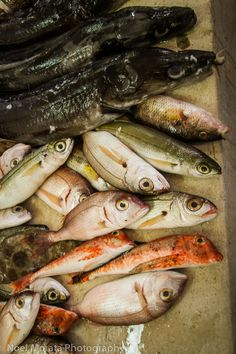 Split, Croatia - the morning fish market | Travel Photo #split #croatia #markets