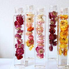 「植物標本集」という意味を持つハーバリウムが、美しさが長持ちするお花として注目されています。切り花とも鉢植えとも違うハーバリウムは、新しいお花の楽しみ方です♪