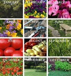 Follow these monthly tips to keep your lawn and garden in top shape.