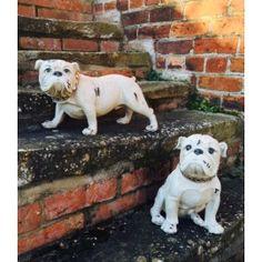 Antiqued English Bulldog