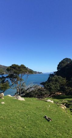 Great Barrier Island - NZ