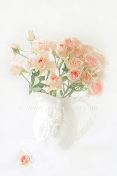 Photo Soft Pink Roses by Jacky Parker on 500px