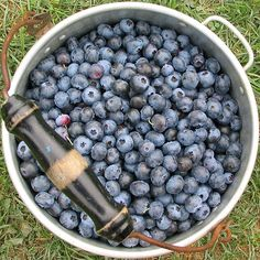 Nutrition of Edible Juniper Berries