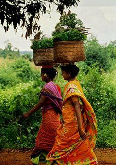 INDIA - Tea Pickers