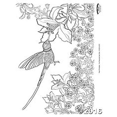 Hummingbird Adult Coloring Page Free Printable