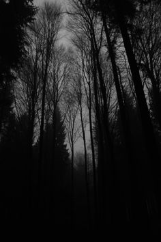 frostklamm - to be found Creepy Pictures, Dark Pictures, Halloween Pictures, Forest Wallpaper, Dark Wallpaper, Eerie Photography, Surreal Photos, Christmas Scenes, Dark Places