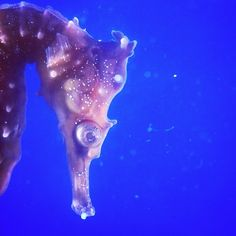seahorse! #saycreate