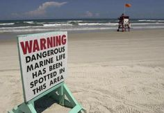 this means those iridescent blue bubbles lying on the sand at the tide line are Man-O-War jellies and you best watch out
