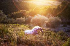 Slawik | Equine Photography by Christiane Slawik | 4