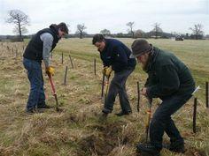 Suffolk Wildlife Trust volunteers planting trees at Bradfield Woods. Spring 2014.